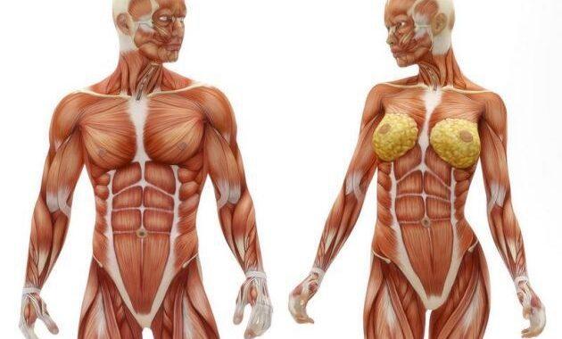 musculos-corpo